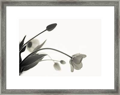 Elegant Bow Framed Print