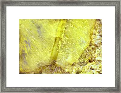 Citrine Dream Framed Print by Rebecca Lemke