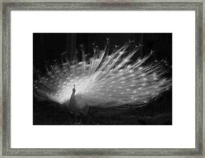 Elegant In White Framed Print