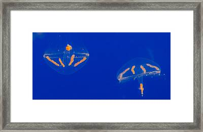 Elegant Jelly 1 Framed Print by Scott Campbell