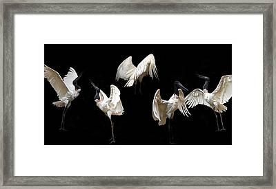Elegant Raptor Framed Print by Elizabeth Hart