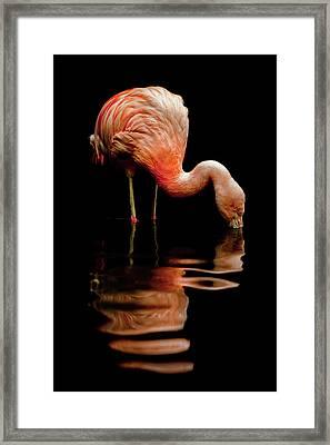 Elegant Reflection Framed Print by Barb Leopold