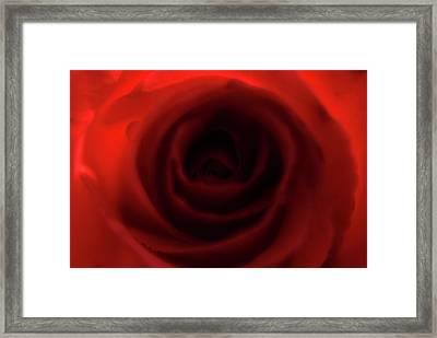 Elegant Rose Framed Print by Bransen Devey