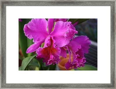 Elegant Framed Print by Tara Moorman Photography