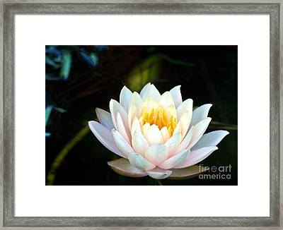 Elegant White Water Lily Framed Print