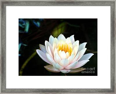 Elegant White Water Lily Framed Print by Ken Frischkorn