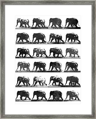 Elephant Animal Locomotion - Bw Framed Print by Aged Pixel