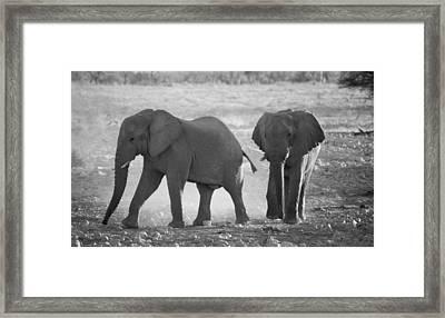 Elephant Buddies - Black And White Framed Print by Nancy D Hall