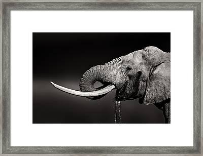 Elephant Bull Drinking Water - Duetone Framed Print by Johan Swanepoel