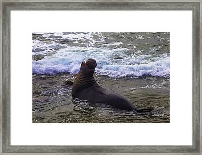 Elephant Bull Seal In Surf Framed Print by Garry Gay