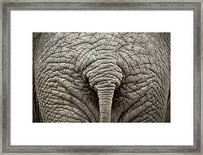 Elephant But Framed Print by images by Luis Otavio Machado
