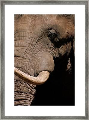 Elephant Close Up Framed Print by Tess Haun