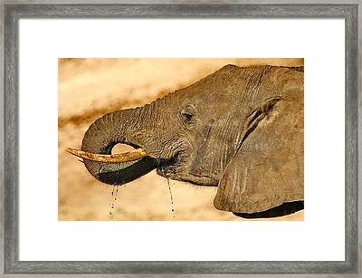 Elephant Dribble Framed Print by Tom Cheatham