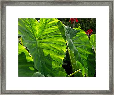 Elephant Ear 448 Framed Print
