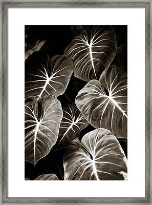 Elephant Ears On Parade Framed Print by Marilyn Hunt