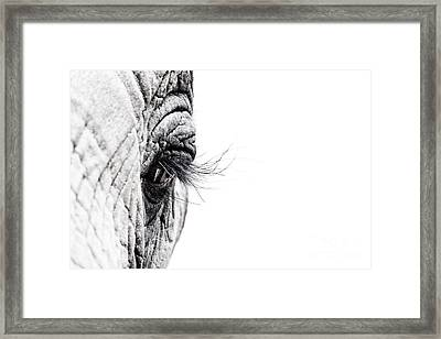 Elephant Eye Framed Print by Jane Rix