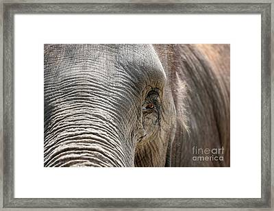 Elephant Eye Framed Print by Jeannie Burleson