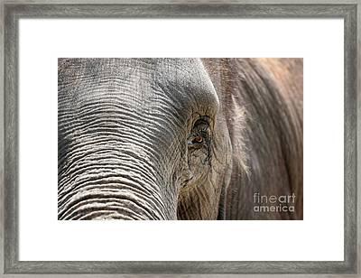 Elephant Eye Framed Print