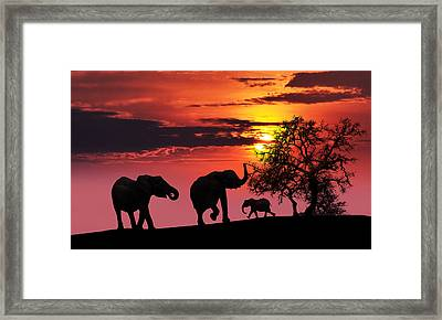 Elephant Family At Sunset Framed Print