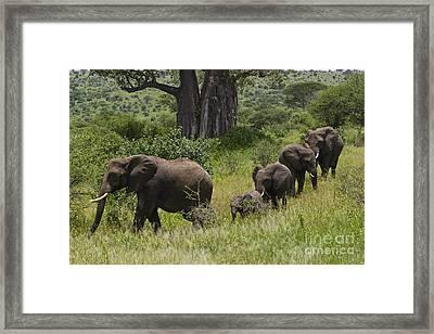 Elephant Family Tarangire Np Framed Print