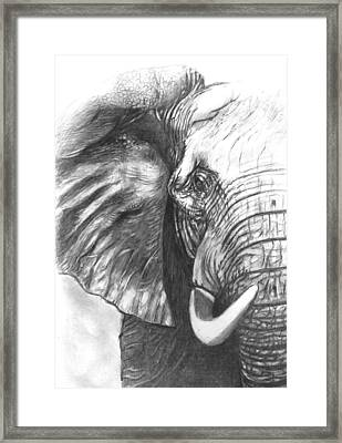 Elephant For Alabama  Framed Print