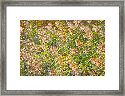 Elephant Grass Photo Framed Print by Peter J Sucy