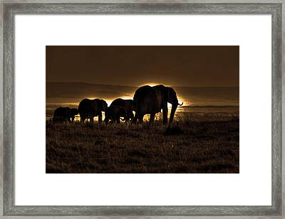 Elephant Herd On The Masai Mara Framed Print