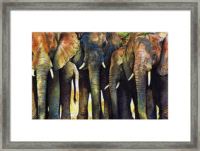 Elephant Herd Framed Print by Paul Dene Marlor
