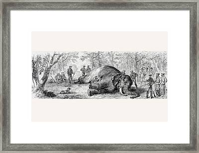 Elephant Hunting In Africa In The 1860 Framed Print