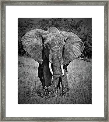 Framed Print featuring the photograph Elephant In Amboseli by Antonio Jorge Nunes