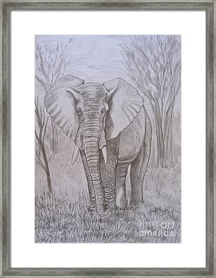 Elephant In Graphite Framed Print by Caroline Street