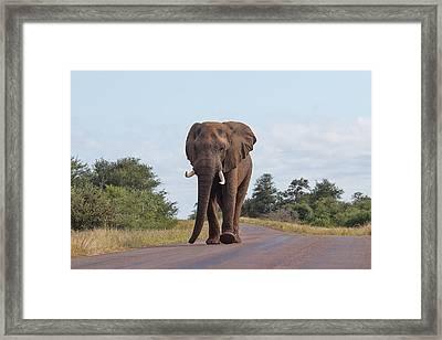 Elephant In Kruger Framed Print