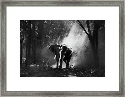 Elephant In The Heat Of The Sun Black And White Framed Print by Georgiana Romanovna