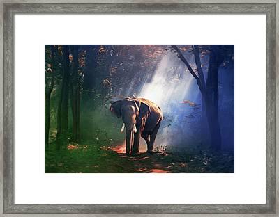 Elephant In The Heat Of The Sun Framed Print