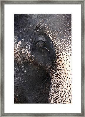 Elephant Framed Print by Jane Rix