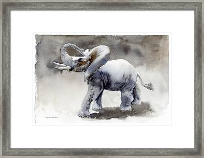 Elephant Light Study  Framed Print