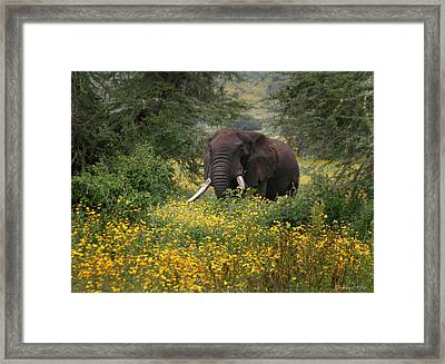 Elephant Of The Crater Framed Print