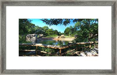 Elephant Pano - Kc Zoo Framed Print