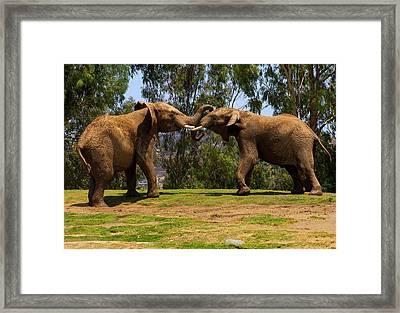 Elephant Play 3 Framed Print