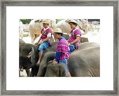 Elephant Riders Framed Print by Sue Ann Rybarczyk