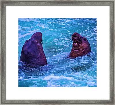 Elephant Seals Fighting In Ocean Surf Framed Print