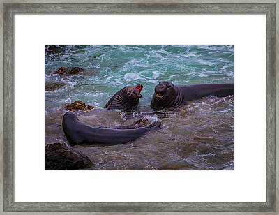 Elephant Seals In The Surf Framed Print