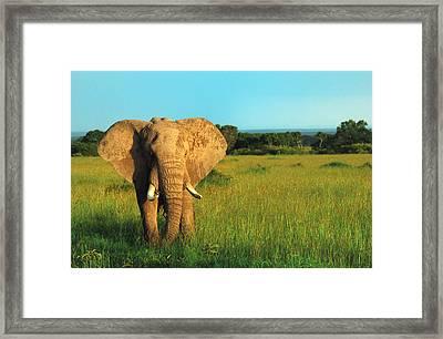 Elephant Framed Print by Sebastian Musial