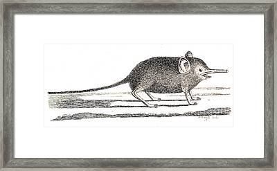 Elephant Shrew With Long Proboscis Framed Print by Wellcome Images