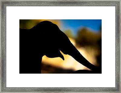 Elephant Silhouette Framed Print by Ralph Vazquez
