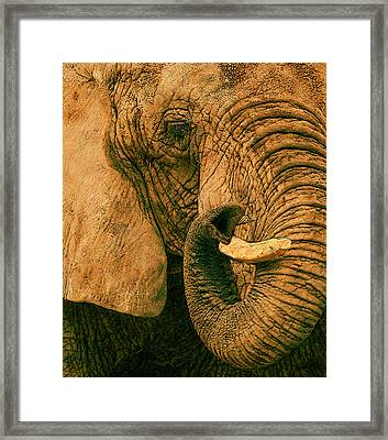 Elephant Study In Texture Framed Print