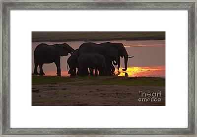 Elephant Sunset Framed Print