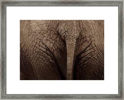 Elephant Tail Framed Print