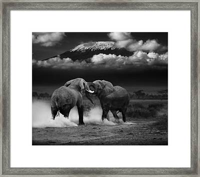 Elephant Tussle Framed Print by Mike Gaudaur