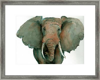 Elephant Up Close Framed Print
